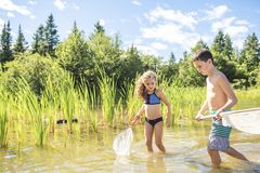 Cute girl and boy fishing with a net on a lake. A girl and boy fishing with a net on a lake stock photography