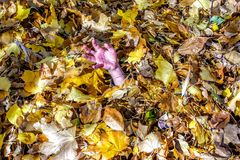Girl or boy hand sticking out of pile of fall raked leaves. In South Jordan Utah, maple leaves Royalty Free Stock Photos