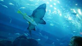 Girl and boy looking at shark tank at the aquarium.