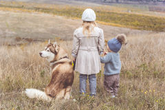 Girl and boy are walking with husky dog Stock Photography