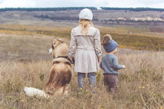 Girl and boy are walking with husky dog Royalty Free Stock Image