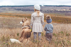 Girl and boy are walking with husky dog Stock Photos
