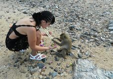 A girl on an island playing with a wild monkey. A girl with a braid from a lot of braids plays with a wild monkey on an uninhabited island Royalty Free Stock Images