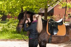 Girl bridles her horse Stock Photos