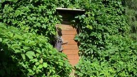 Girl broom bucket. Gardener girl in jeans shirt and hat bring broom tool and plastic bucket to rural basement storage house stock video