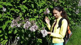 Girl brunette woman with hair in a ponytail and a backpack walks through the city and smelling the flowers on the lilac bushes. Purple fragrant flowers stock video footage