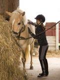 Girl brush the Horse stock photography