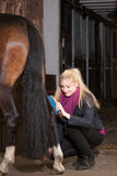 Girl brushes her pony Royalty Free Stock Photo