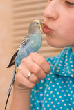 Girl and budgie Royalty Free Stock Image