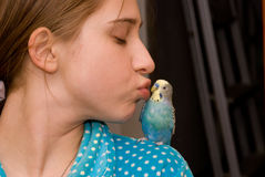 Girl and budgie kissing stock photo