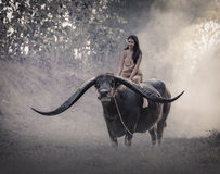 The girl with Buffalo royalty free stock photos