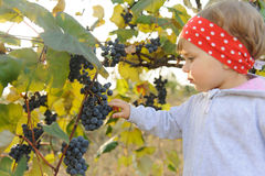 Girl with Bunch of Grapes Royalty Free Stock Photography