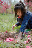 A girl bury the flowers Royalty Free Stock Images