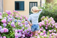 Girl is in bushes of hydrangea in sunset garden. Flowers are pink, blue, lilac and blooming in town streets by house. Young woman in denim shorts, straw hat stock photos