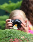 Girl & Butterfly. A girl is photographing a Orange Tip butterfly Stock Images