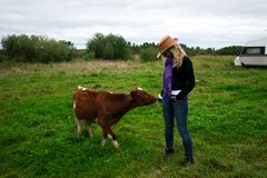 Girl and calf Stock Image