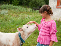 Girl with a calf Royalty Free Stock Images