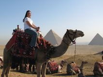 Girl on camel by Great Pyramids Stock Photography