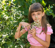 The girl with camomiles Royalty Free Stock Image