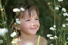 The girl in camomiles Stock Images