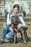 Girl and Cane corso puppy Stock Images