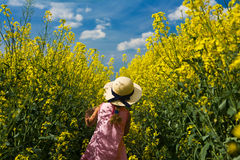 Girl in a canola field. A little girl on expedition in a canola field Royalty Free Stock Images