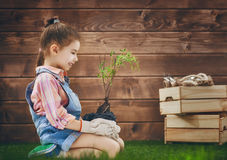 Girl cares for plants Stock Photos