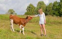 Girl caresses bull Royalty Free Stock Images