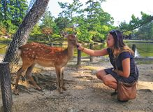 The girl caresses the deer. royalty free stock photos