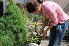 The girl she is caring for plants. Gardener. The girl in shirt and jeans bent over the flowers Royalty Free Stock Image