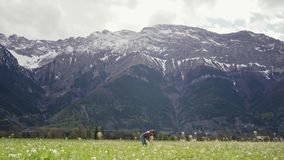Girl in casual clothes standing among wild flowers and gathering dandelions on mountains. General plan. 4k stock video
