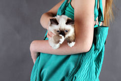 Girl with cat. Girl with birma cat go shopping Royalty Free Stock Photo