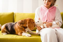 Pets love each other. The girl with cat on the hands sits on the sofa and looking to pets Stock Photo