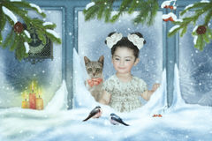 Girl and cat looking out the window. At the bullfinches on Christmas night Stock Image