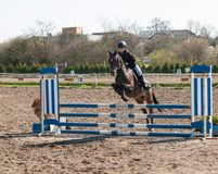 A girl caucasian horse rider riding and jumping a hurdle with her beautiful brown sport pony royalty free stock image