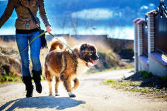Girl with Caucasian shepherd dog, autumn. Young woman with Caucasian shepherd in a delightful spring day Stock Photos
