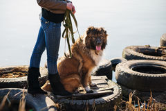 Girl with Caucasian shepherd dog, autumn. Young woman with Caucasian shepherd in a delightful spring day Stock Photo