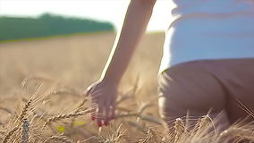 Girl On Cereal Field stock footage