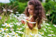 Girl on chamomile field, focus on foreground. Blurred image of girl among chamomile, focus on foreground Royalty Free Stock Photo