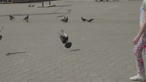 Girl chases pigeons, they fly away. Slow motion view stock video footage