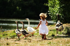 Girl Chasing Geese stock image