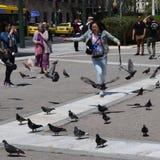Girl chasing pigeons Royalty Free Stock Photos