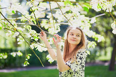 Girl in cherry blossom garden on a spring day Royalty Free Stock Photo