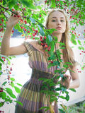 Girl in cherry garden Stock Image