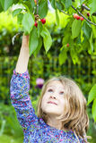 Girl and cherry tree Stock Images