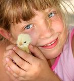 The girl with a chicken in hands. A smiling girl holds a small yellow chicken Stock Image