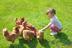 Girl and chickens Royalty Free Stock Images