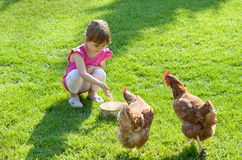 Girl and chickens Stock Photos