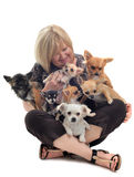 Girl and chihuahuas Royalty Free Stock Photography