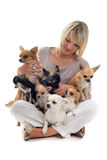 Girl and chihuahuas Royalty Free Stock Photo